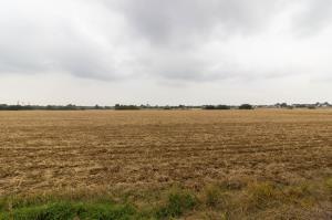 Views towards farm land of Oxford Road, Rochford, Essex